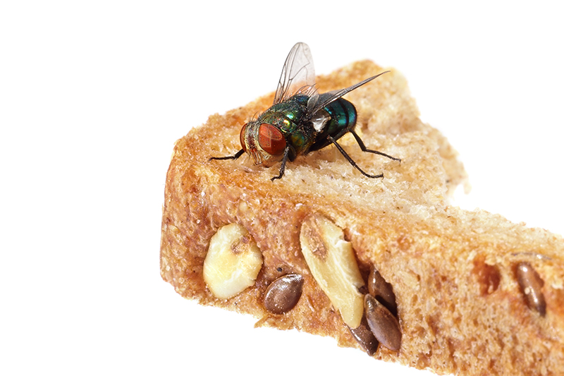 Fly Pest Control in Enfield Greater London